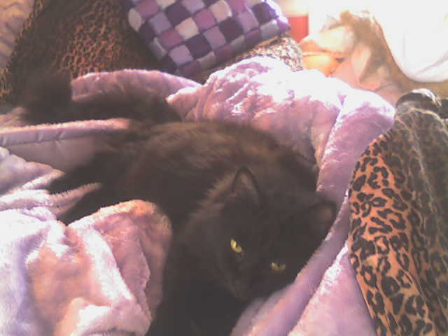 kittyonbed.jpg